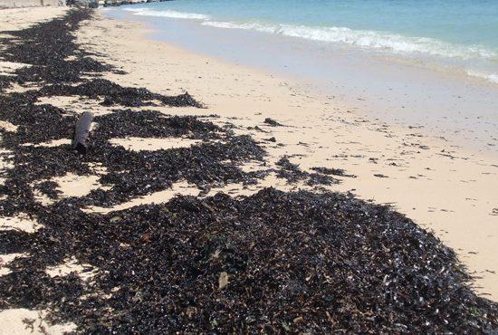 Ô nhiễm dầu khu vực đảo Phú Quốc